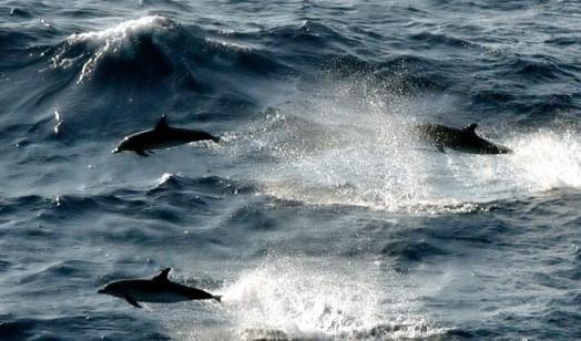 flyingdolphins.jpg
