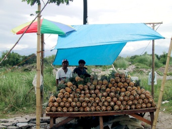 pineapple-stand1.jpg