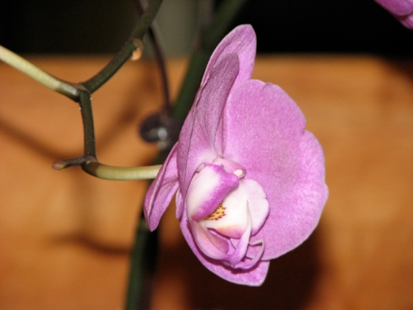 beautiful-orchid-2.jpg