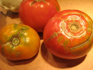 They may call them Ugly Tomatoes, but they are usually the BEST tasting